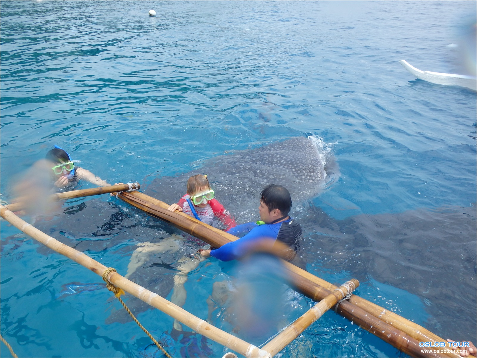 cebu oslob whale shark watching day tour 26 aug 2014 oslob tour