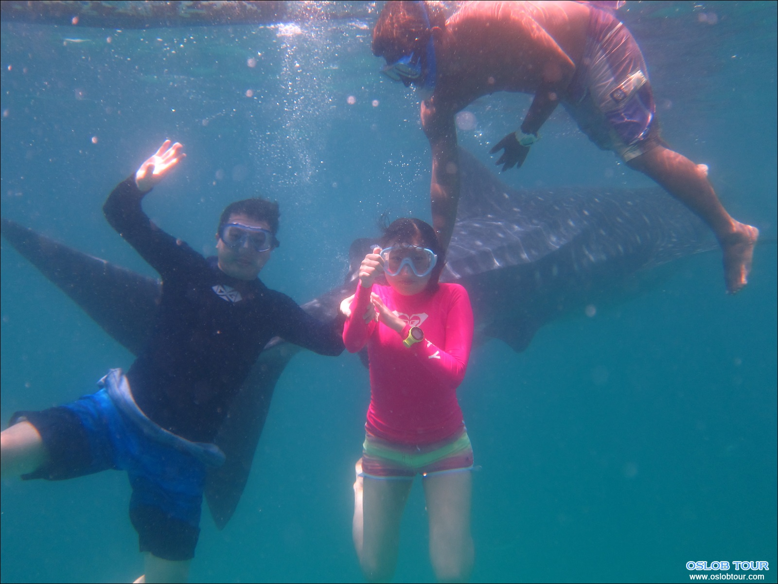 cebu oslob whale shark watching day tour 6 aug 2014 oslob tour