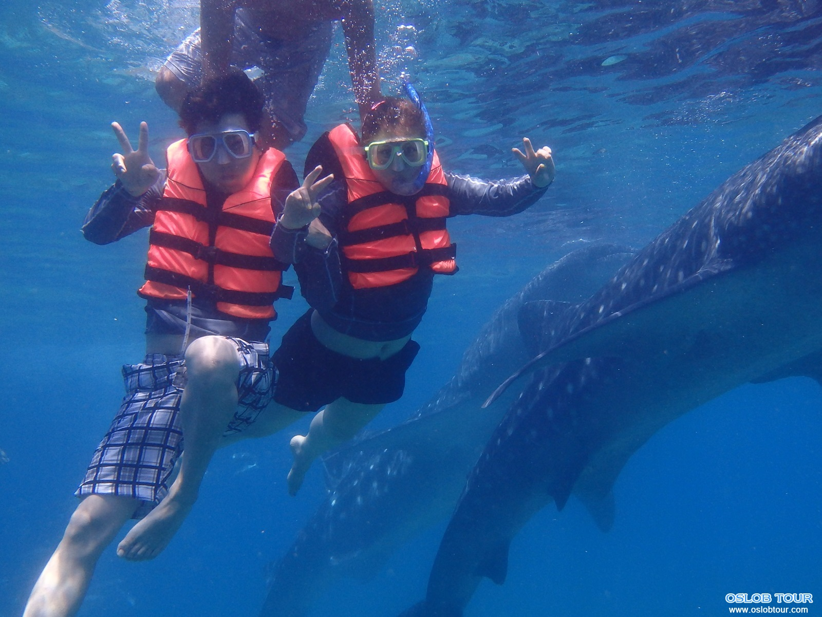 cebu oslob whale shark watching day tour 9 aug 2014 oslob tour