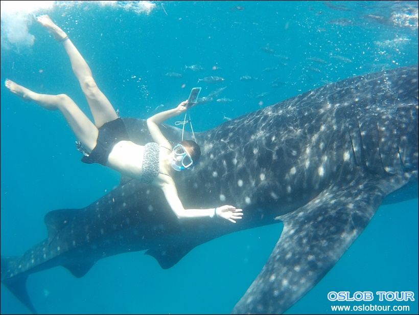 cebu oslob whale shark watching day tour 5 mar 2016 oslob tour