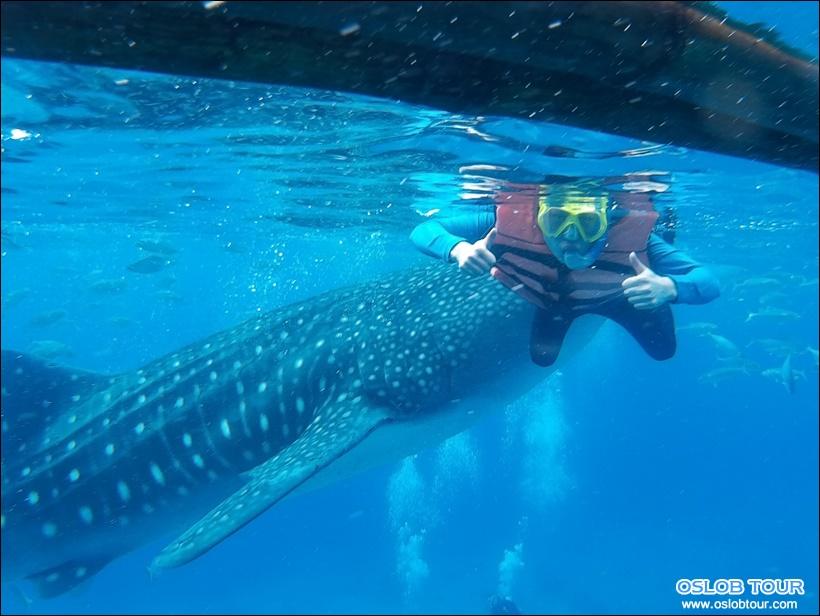 cebu oslob whale shark watching day tour 13 june 2016 oslob tour