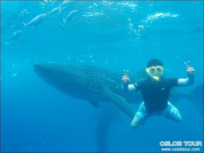 cebu oslob whale shark watching day tour 21 june 2016 oslob tour